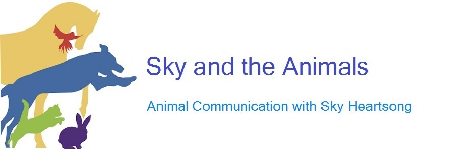 Sky and the Animals
