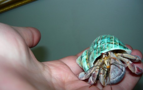 Crushy the Hermit Crab