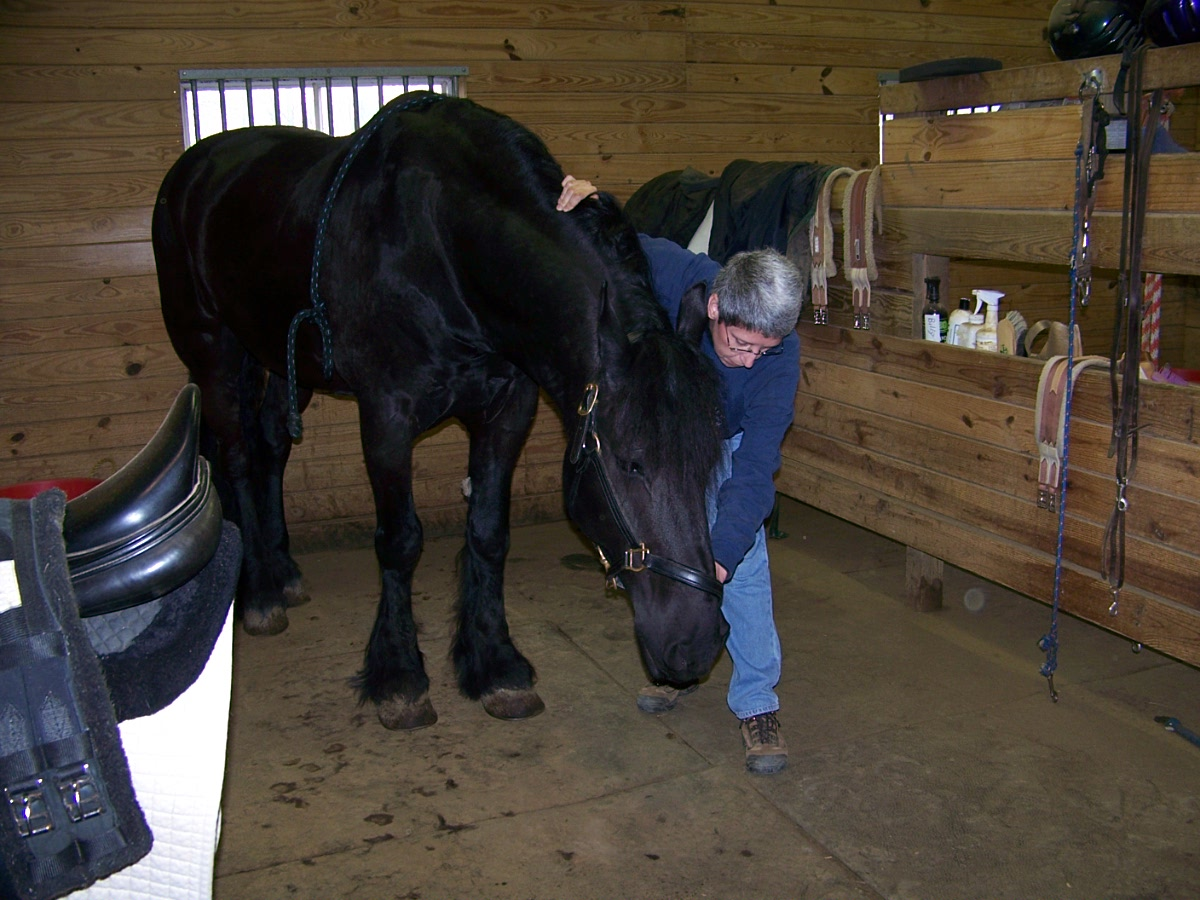 Equine Massage Therapy Sky And The Animals