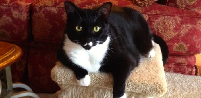 Mittens – Safe and Loved at Last!