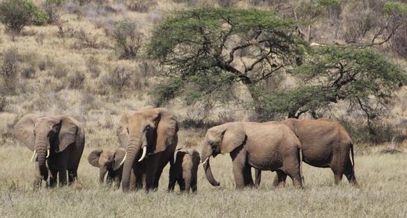 Talking to Elephants