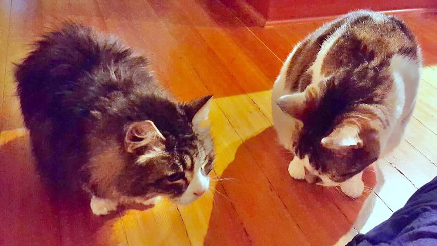 Tanya and Jack:  Friends At Last