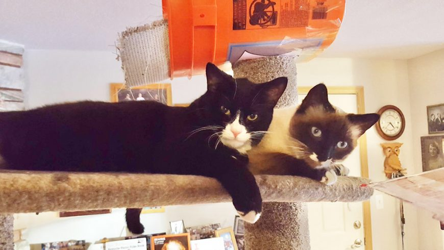 KitKat and Shadow:  Kids Aren't Always Easy to Live With!